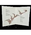 CHEDID (Andrée). 7 textes pour un chant. Dessins de Donatienne Sapriel. Edition originale.